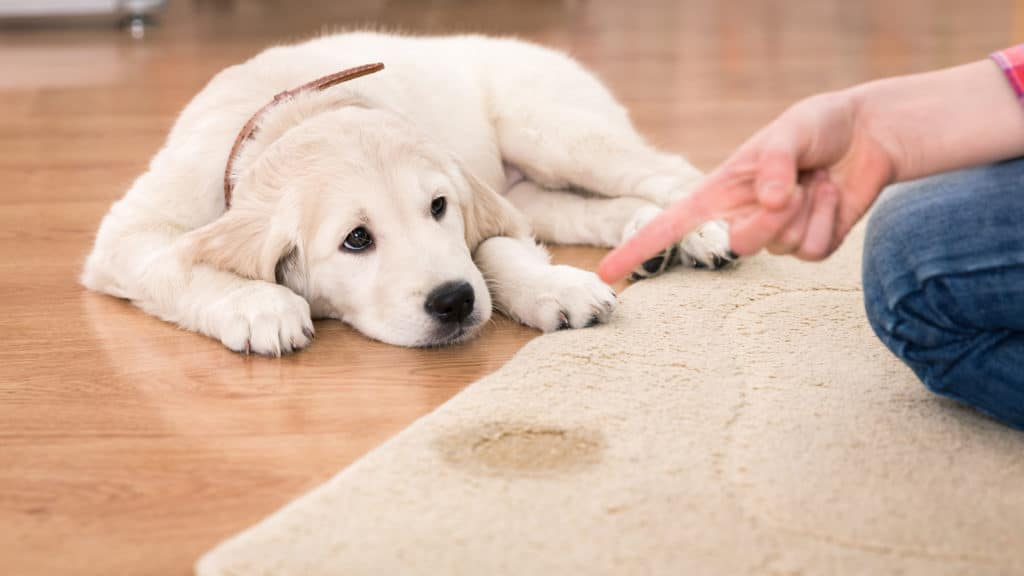 REMOVE PET STAINS AND ODORS cape cod